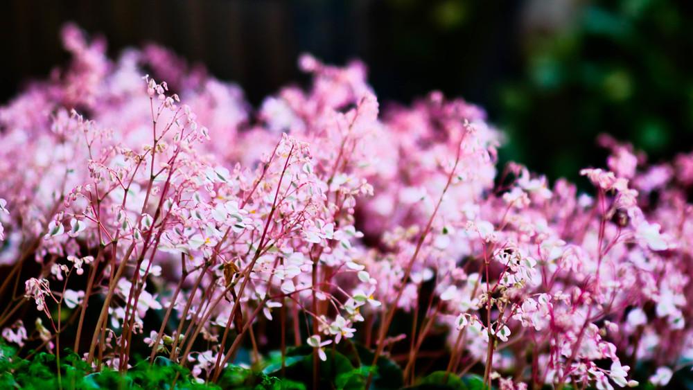 fleurs-10.jpg