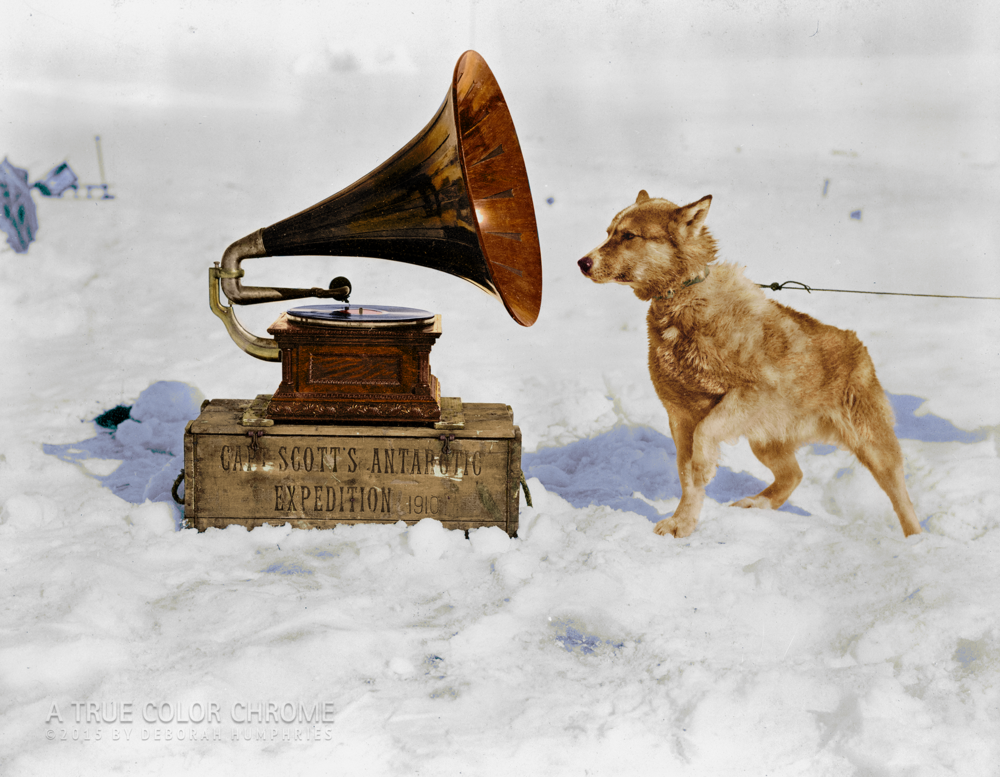 Christ the Dog, January, 1911 Antartica