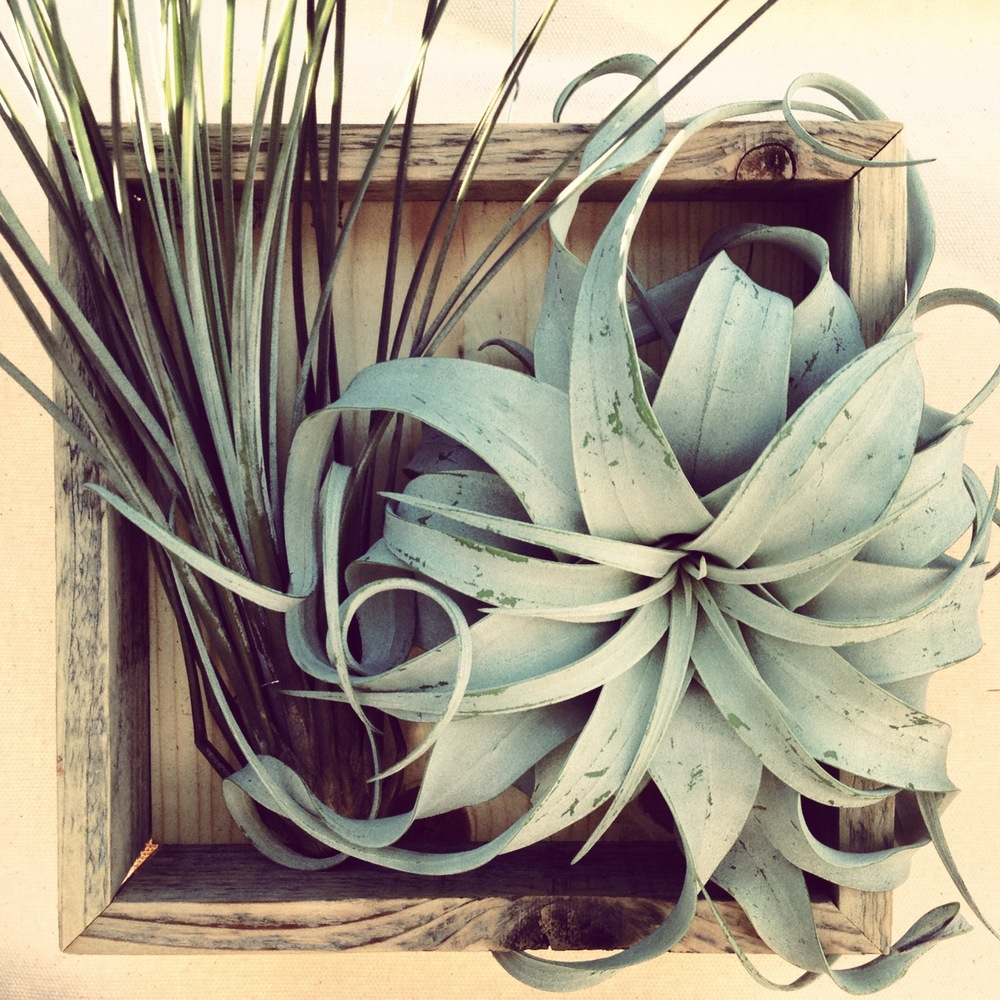 greenlab studio_airplant