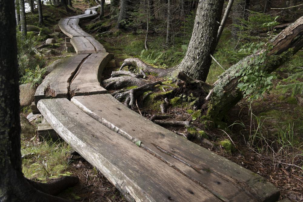 best shot after lightroom, Jordan Pond Path, Acadia National Park