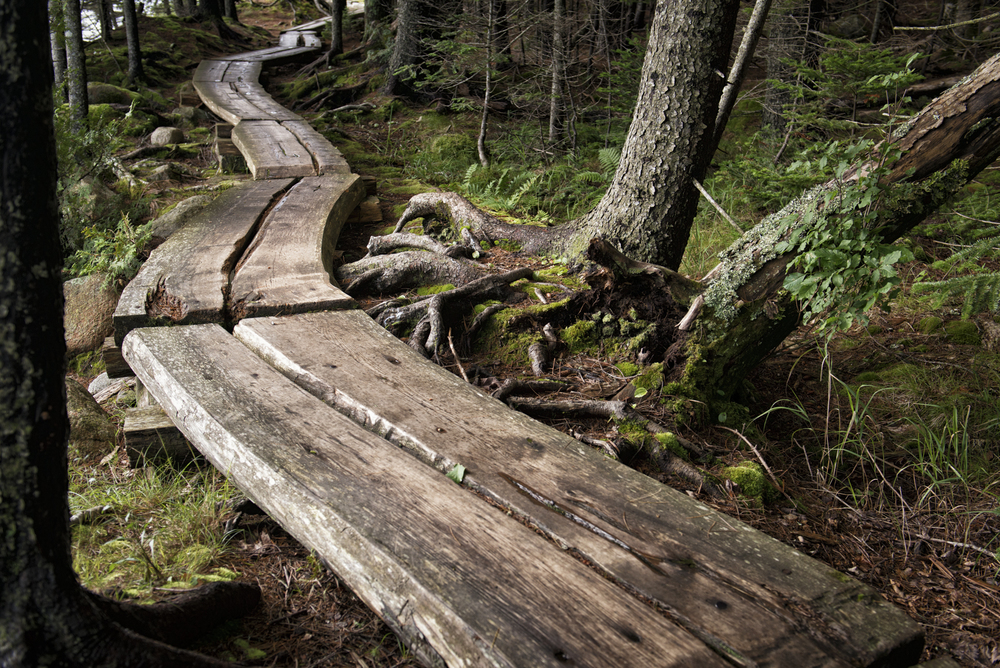 final image post-process, Jordan Pond Path, Acadia National Park