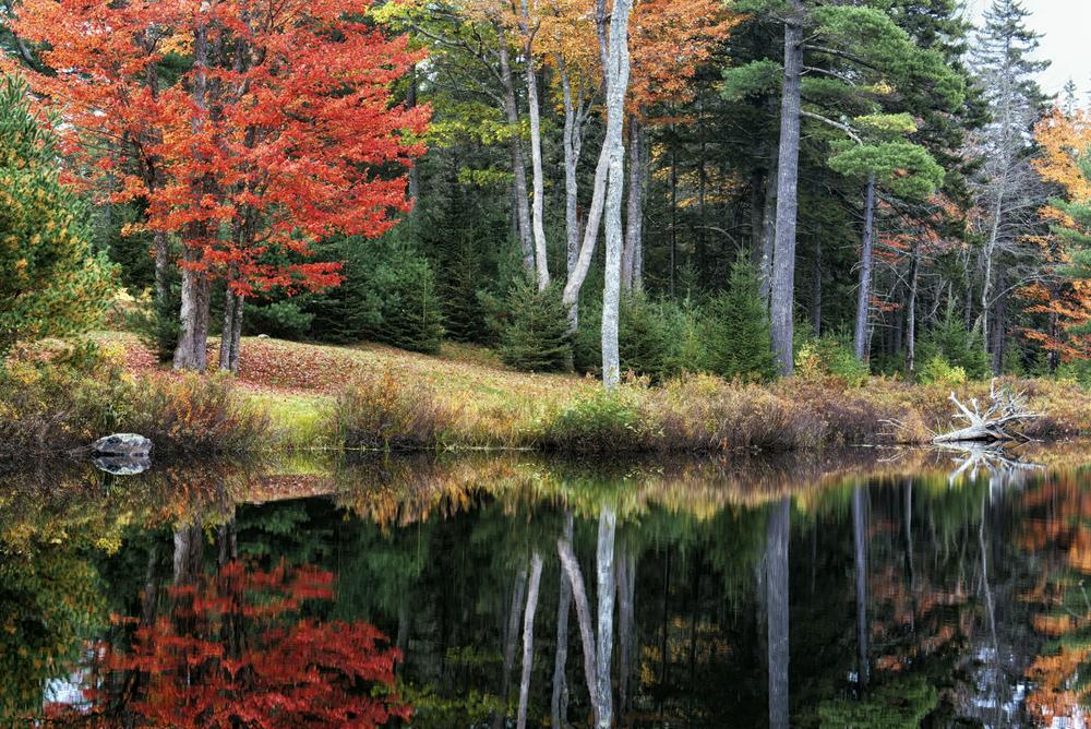 Indian Point Autumn, Mount Desert, Maine