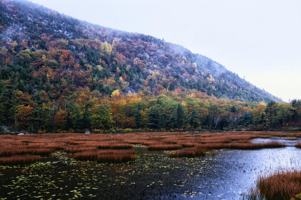The Tarn, Acadia National Park, Maine