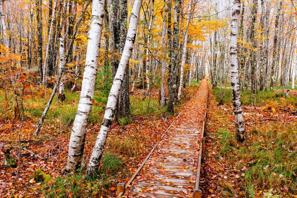 Jesup Path,Acadia National Park,Maine