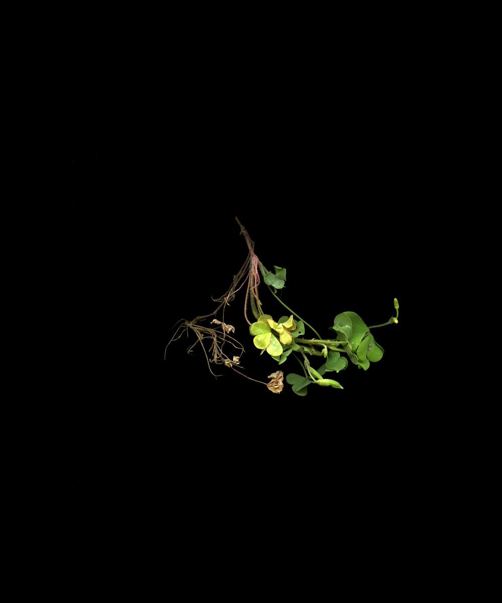 weeds010_web.jpg