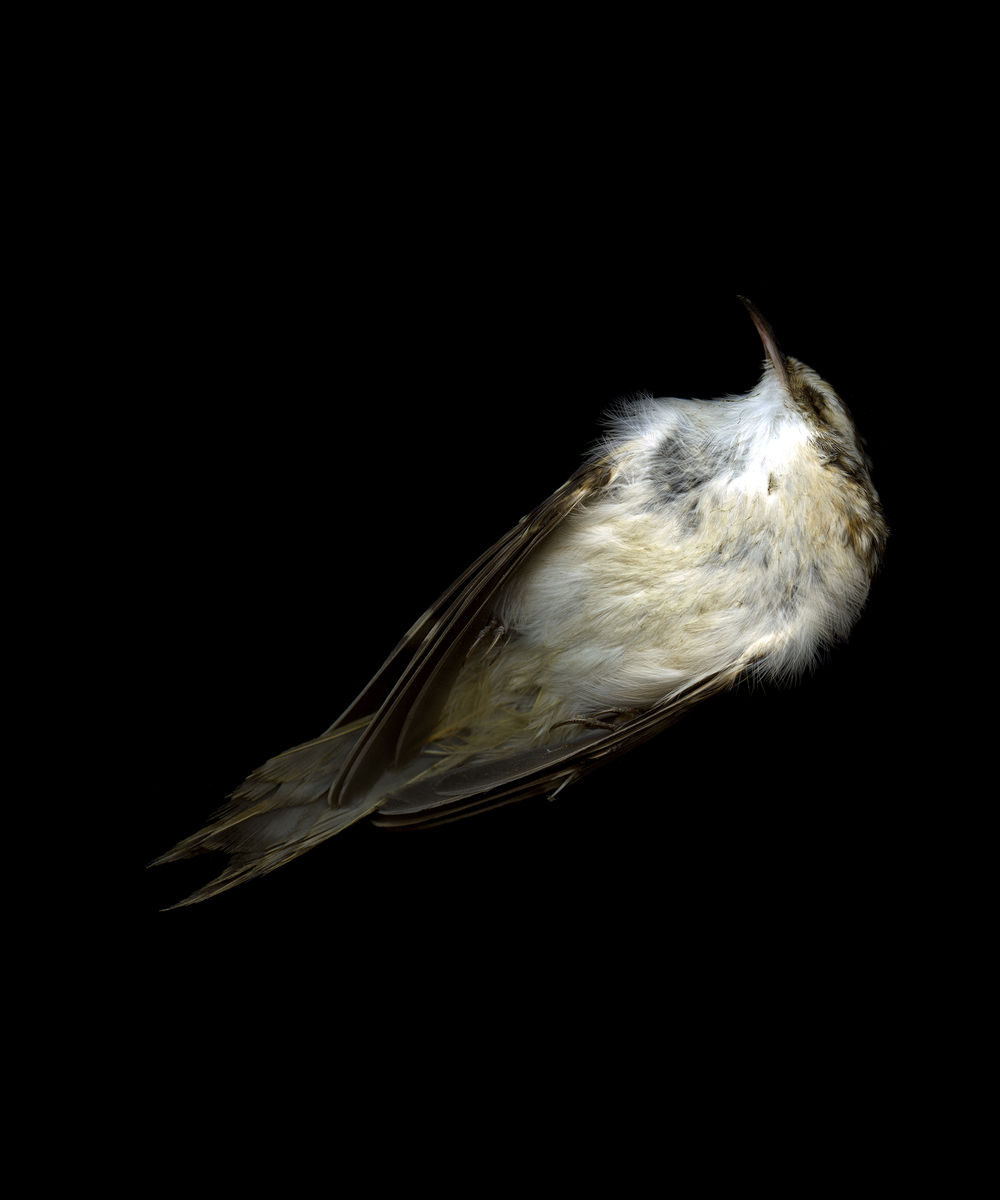 bird4108_web.jpg