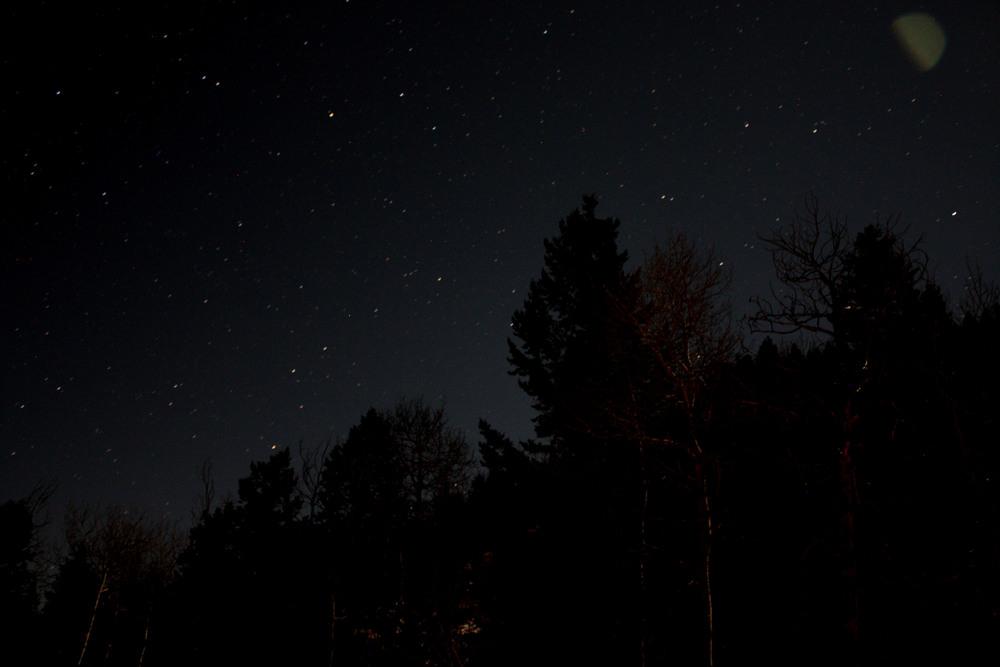 Starry Tree Line