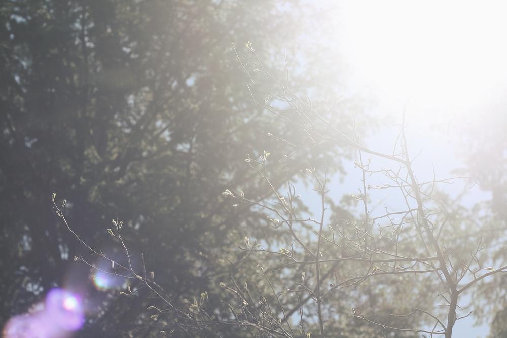 Sun Spots | Tree Talker