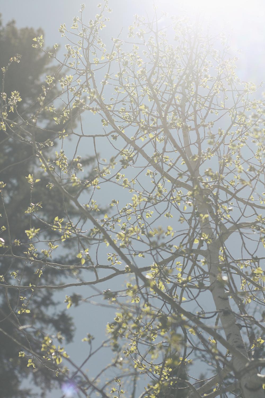 Spring Sun | Tree Talker