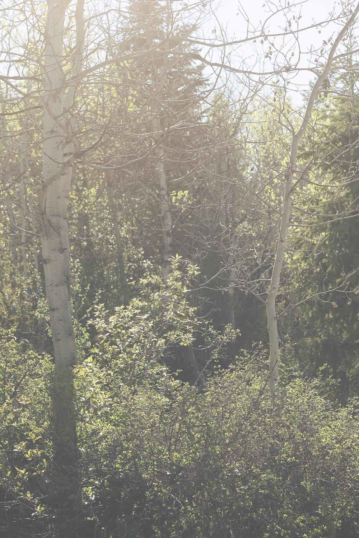 Sunny Forest | Tree Talker Art