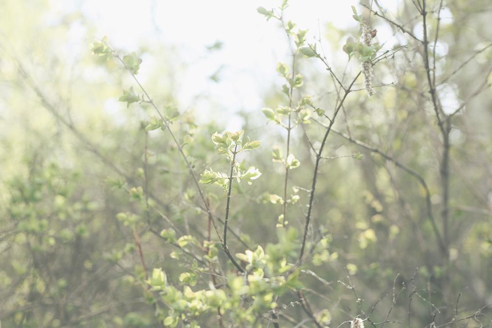 Sunny Forest | Tree Talker