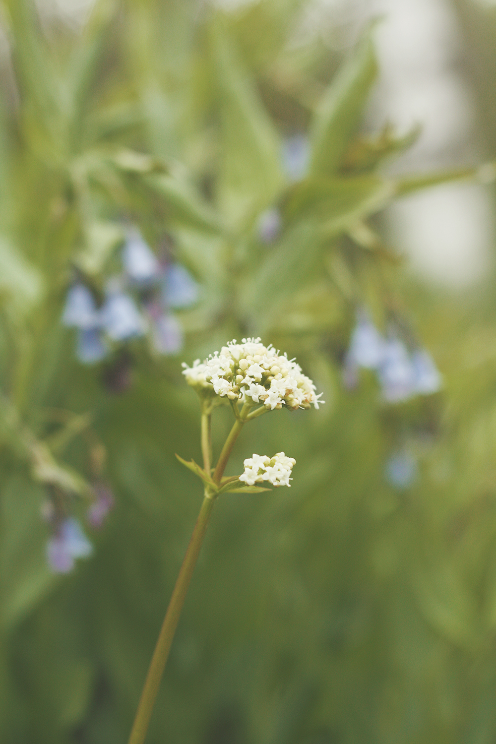 Small White Flowers