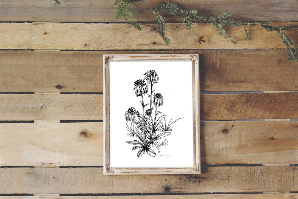 Wilted Flowers Drawing | Tree Talker Art