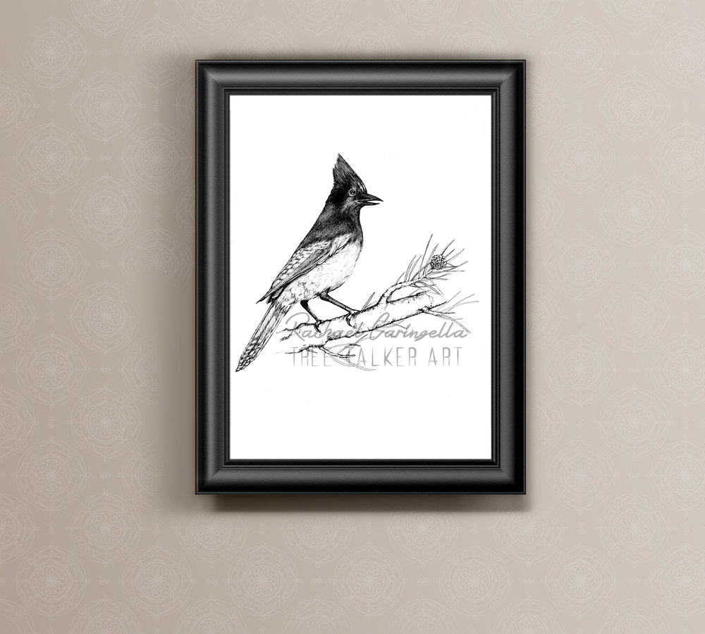 Scrub Jay Ink Drawing Art Print | Tree Talker Art