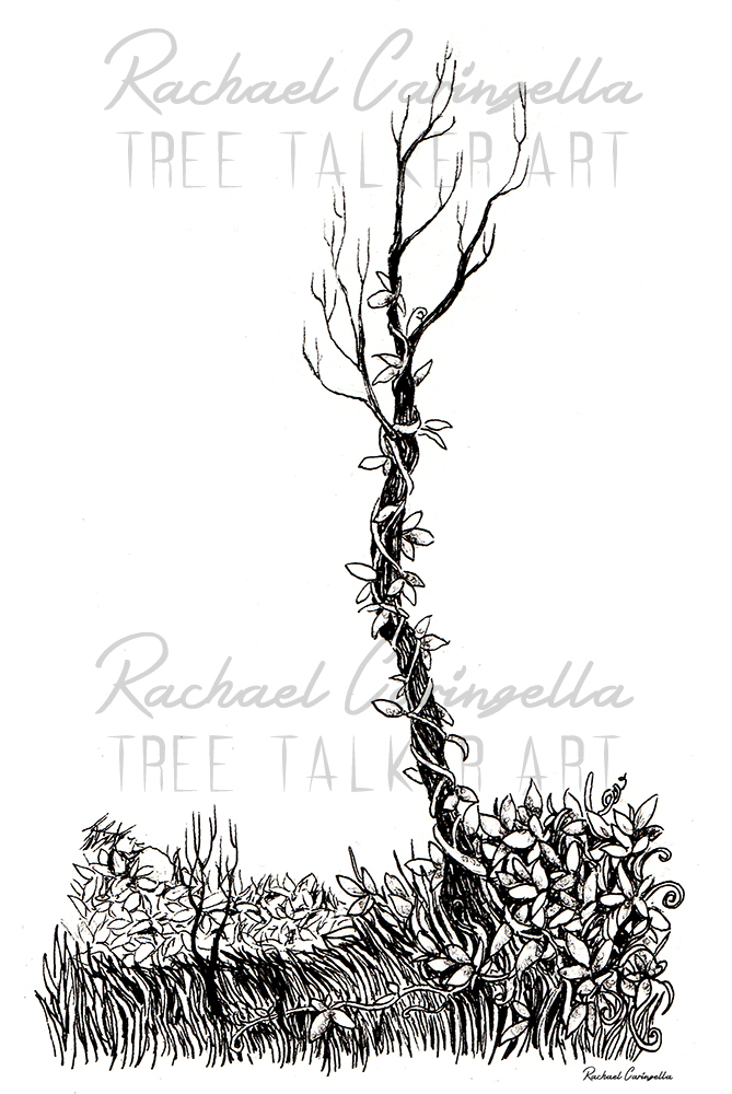 Tangled Tree Illustration | Tree Talker Art
