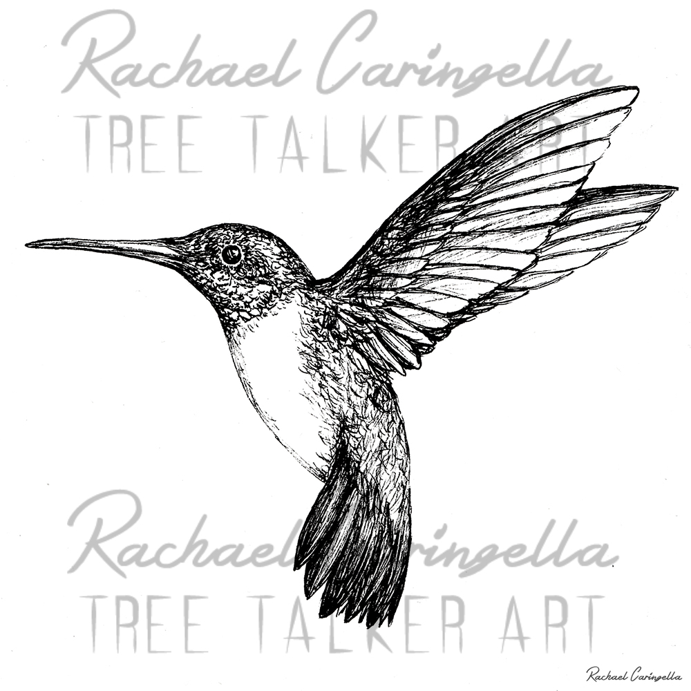 Humming Bird  | Tree Talker Art