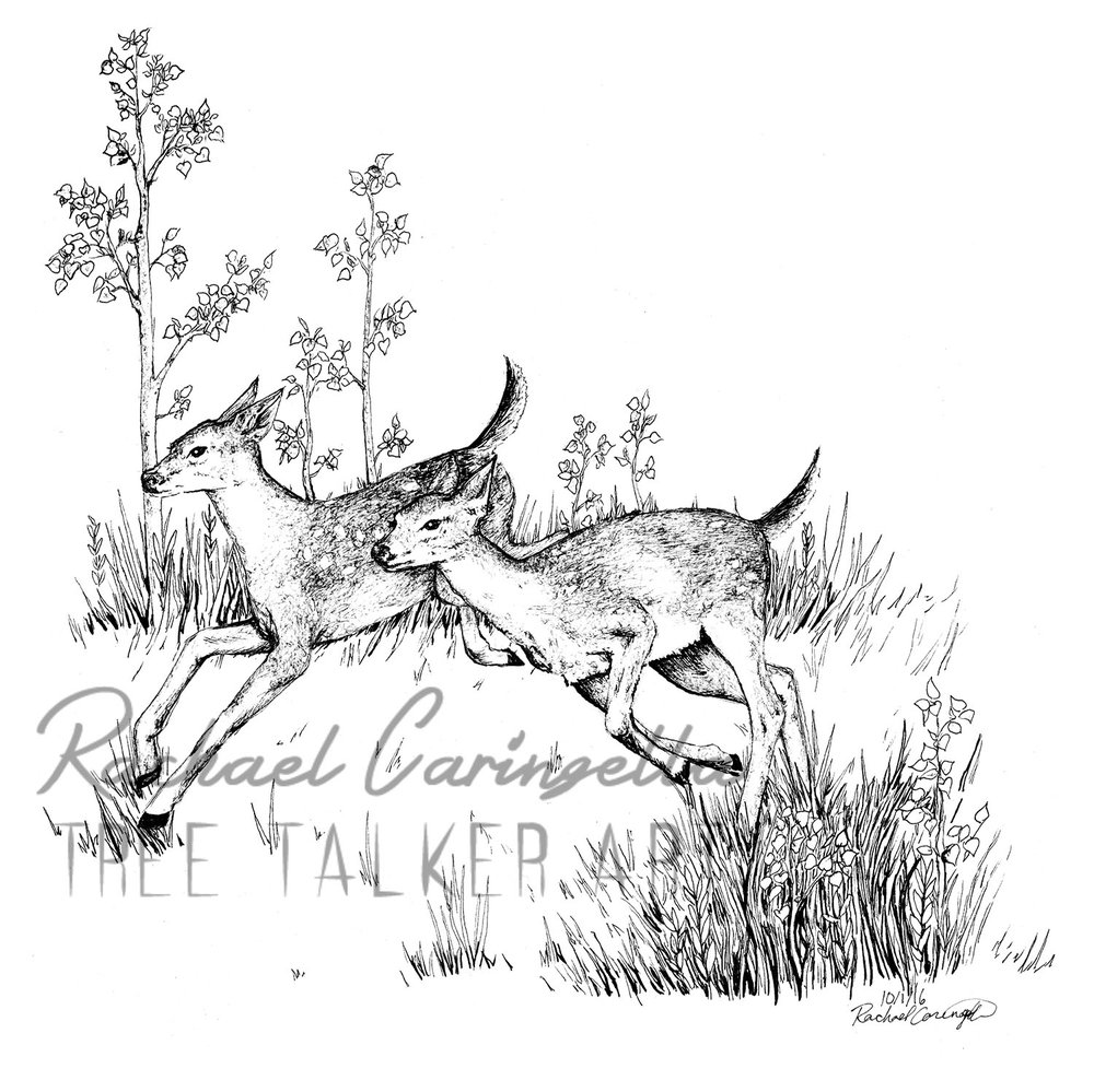 Running Deer  | Tree Talker Art