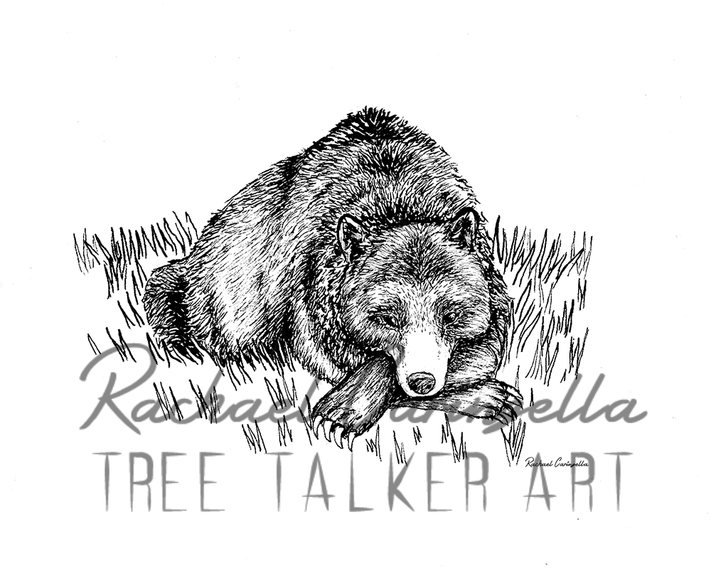 Sleepy Bear  | Tree Talker Art