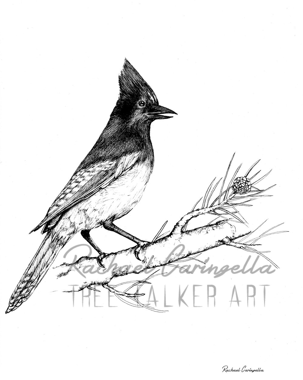 Scrub Jay  | Tree Talker Art
