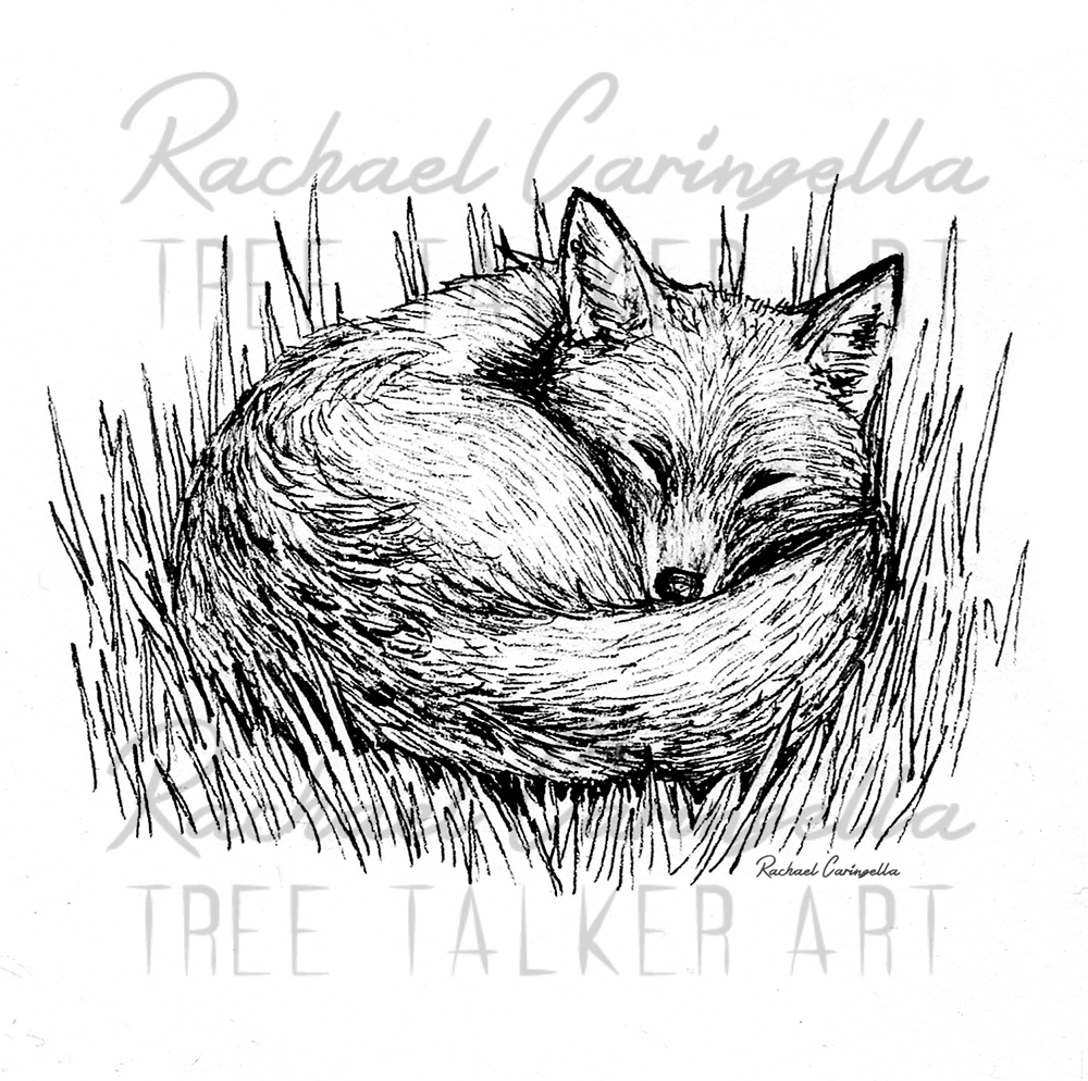 Sleepy Fox  | Tree Talker Art