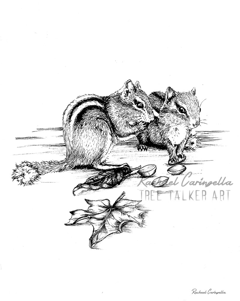 Squirrel Friends  | Tree Talker Art