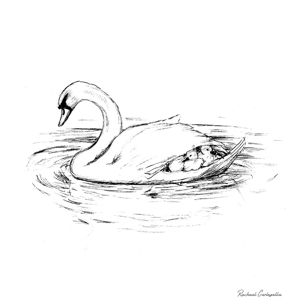 Mamma Swan  | Tree Talker Art