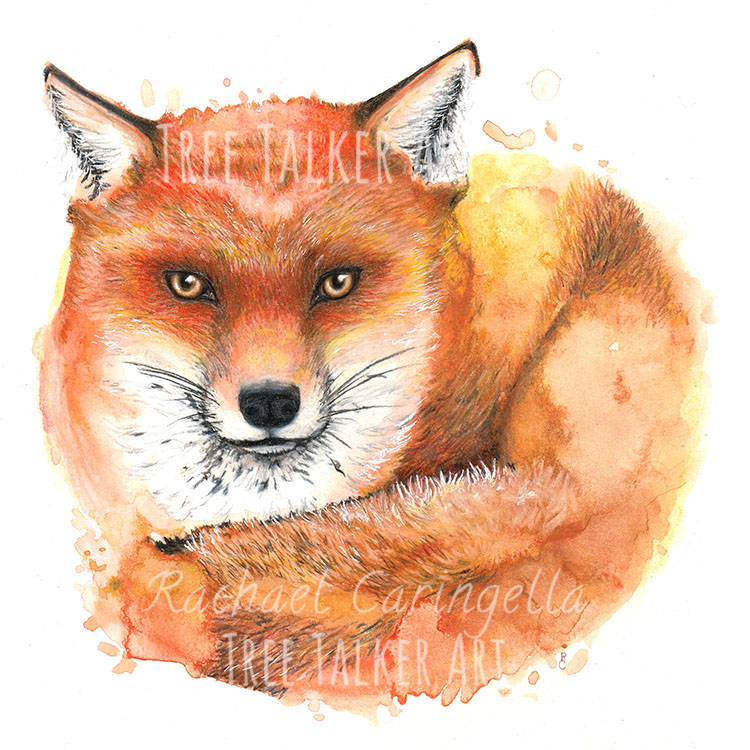 Fox Mixed Media Watercolor Painting by Rachael Caringella | Tree Talker Art