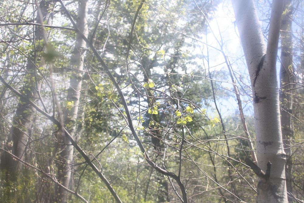 Sun Shine   Tree Talker Art