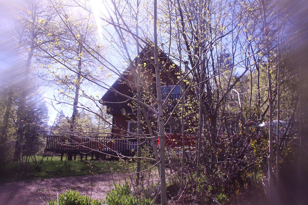 Cabin Living   Tree Talker Art
