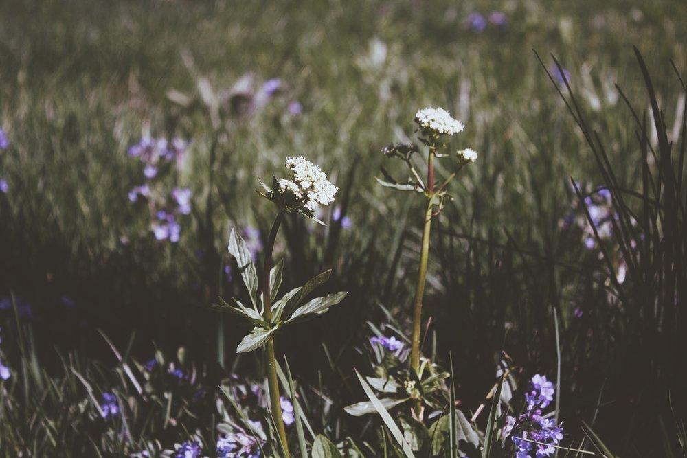 Wild Flowers   Tree Talker Art