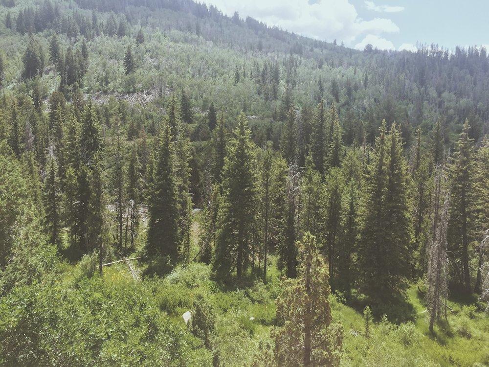 Hiking the Mountains   Tree Talker Art