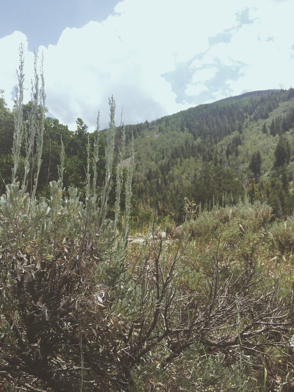 Mountain Ridges   Tree Talker Art