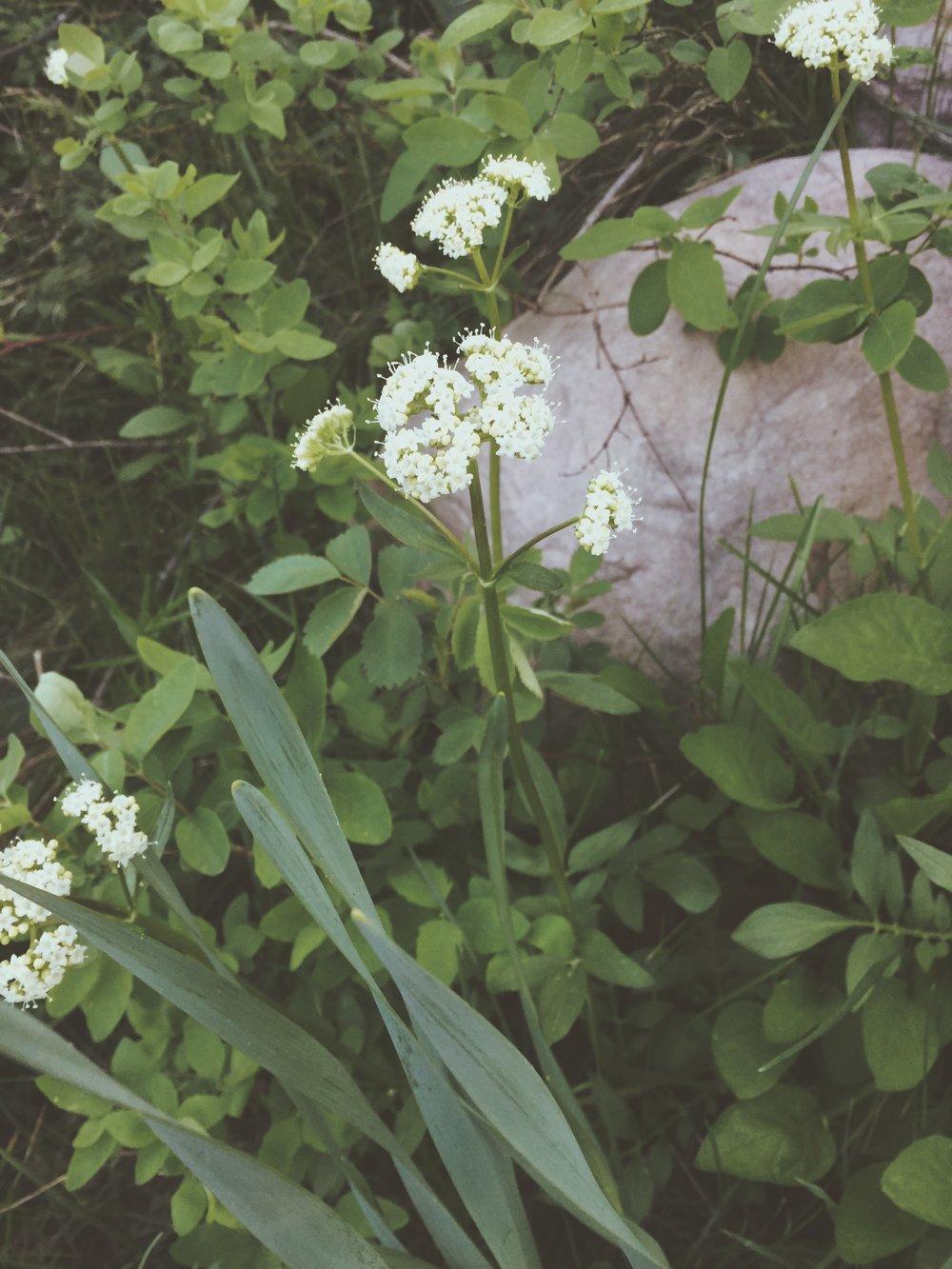 Summer in the woods   Tree Talker Art