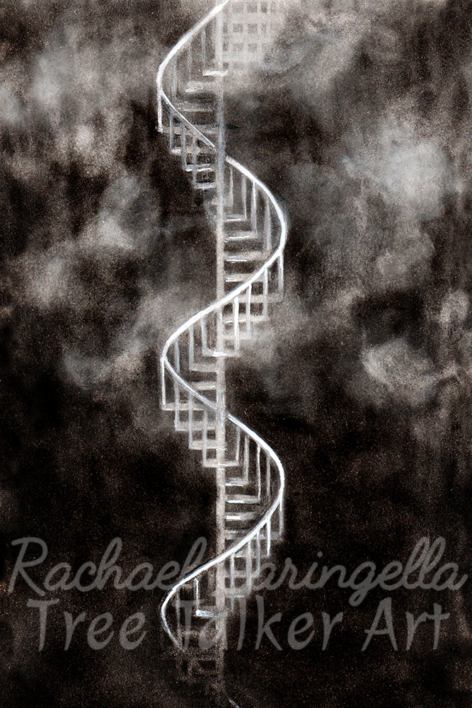 The Spiral Art | Tree Talker Art | Rachael Caringella
