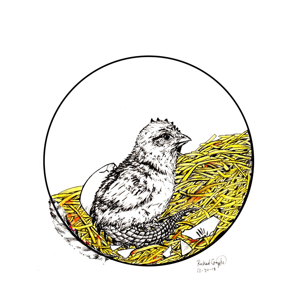 Baby Cockatrice Art Inktober 2018 Illustration of a Baby Cockatrice