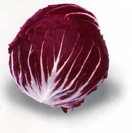 Radicchio /Achicoria roja