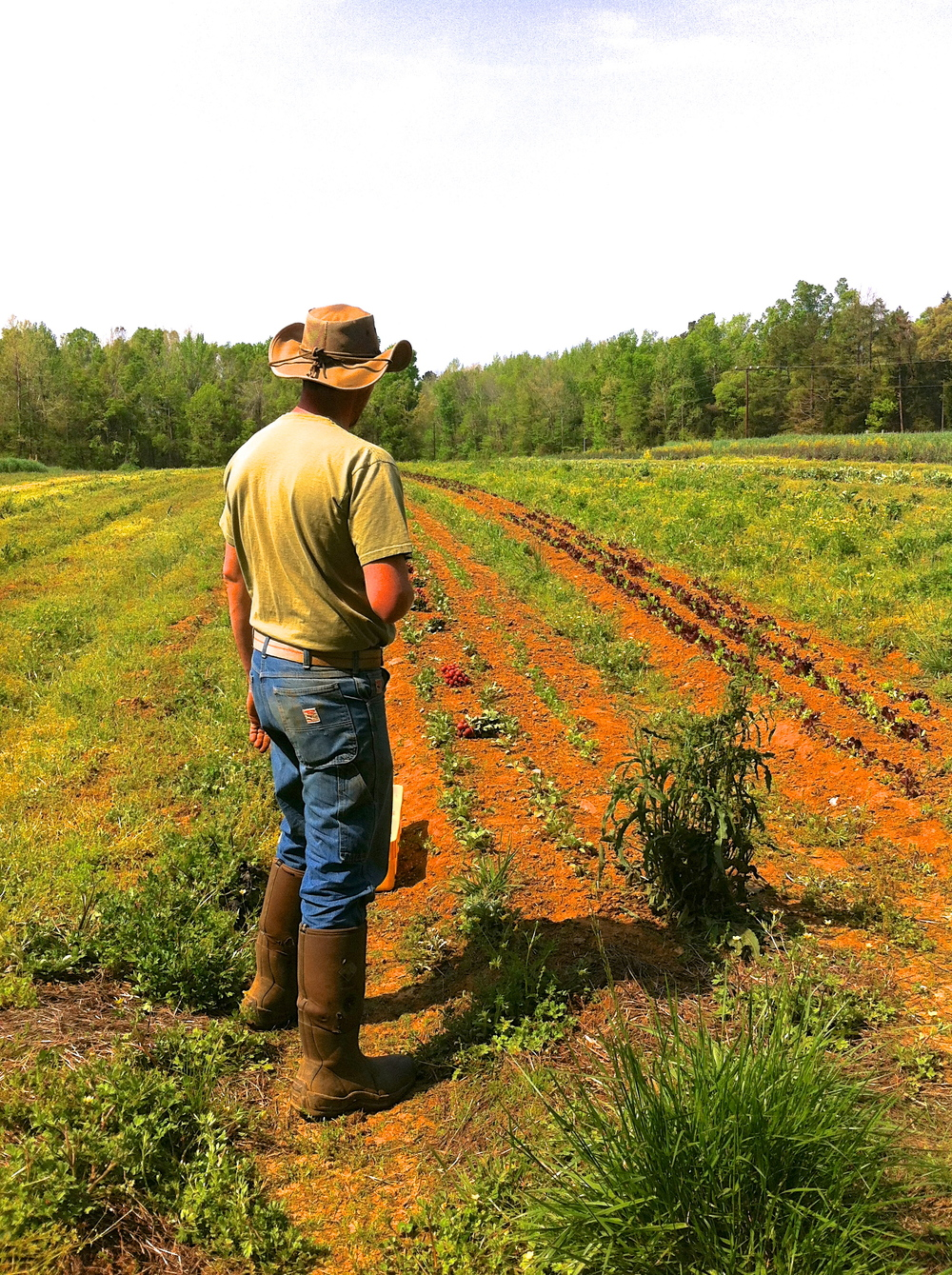 Chris Murray surveys the fields