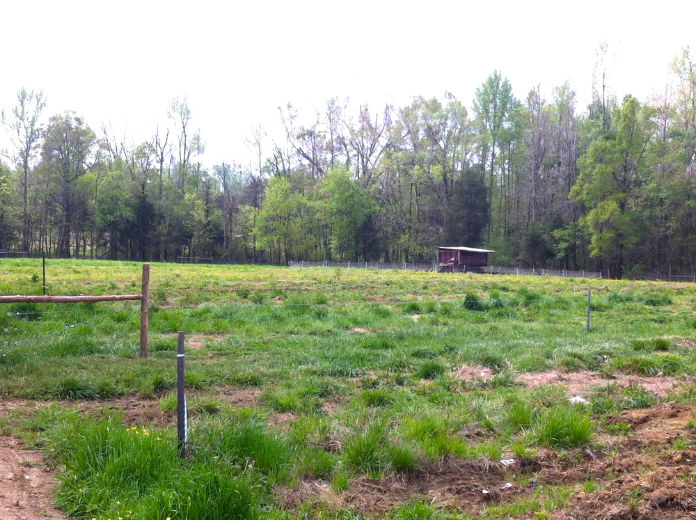 Mobile chicken coop in the pasture