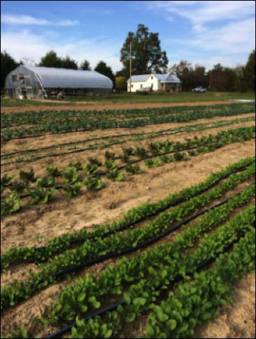 Open Door Farm