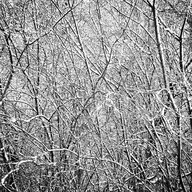 A FOREST, PAUSED  #chicago #chicagoart #chicagophotographer #chicagophotography #filmmaker #filmmaking #production #cinematography #blackandwhitephotography #blackandwhite #bnwlife #bnwphotography #bnw
