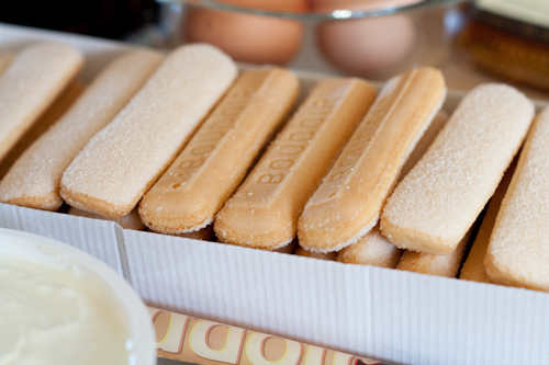 Savaiordi biscuits ready for dunking in coffee