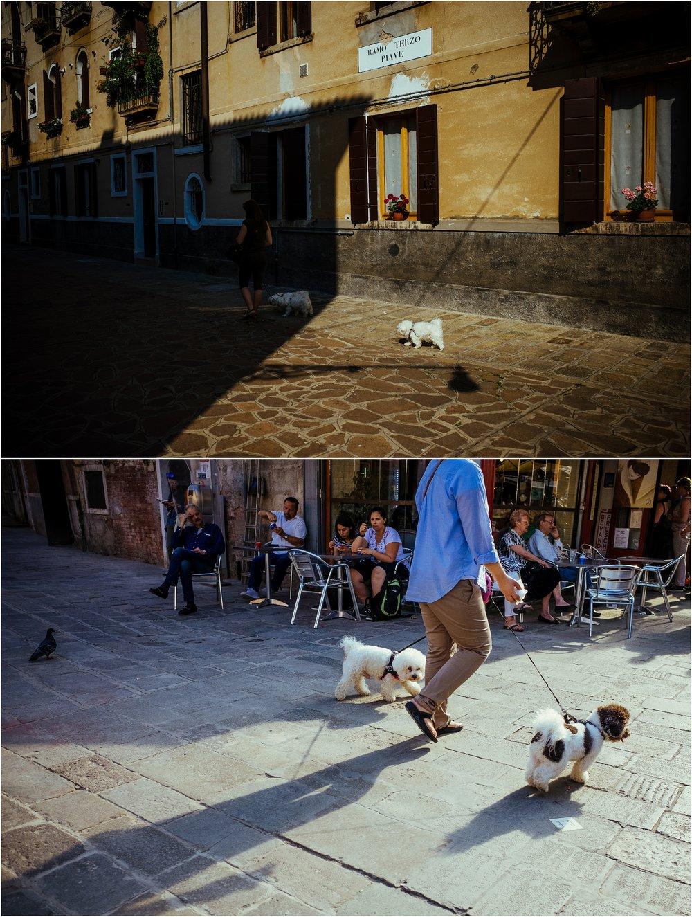 dogs in venice_0004.jpg
