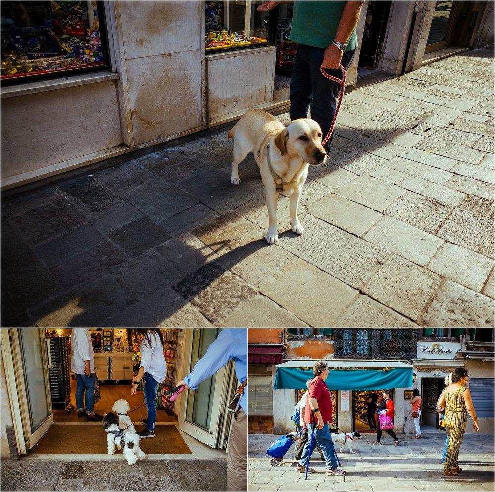 dogs in venice_0005.jpg