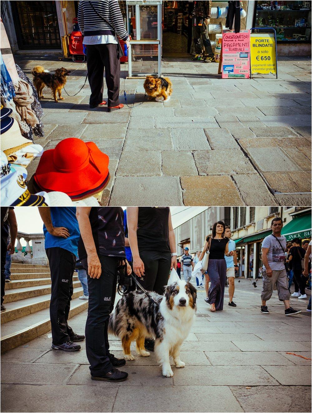dogs in venice_0008.jpg
