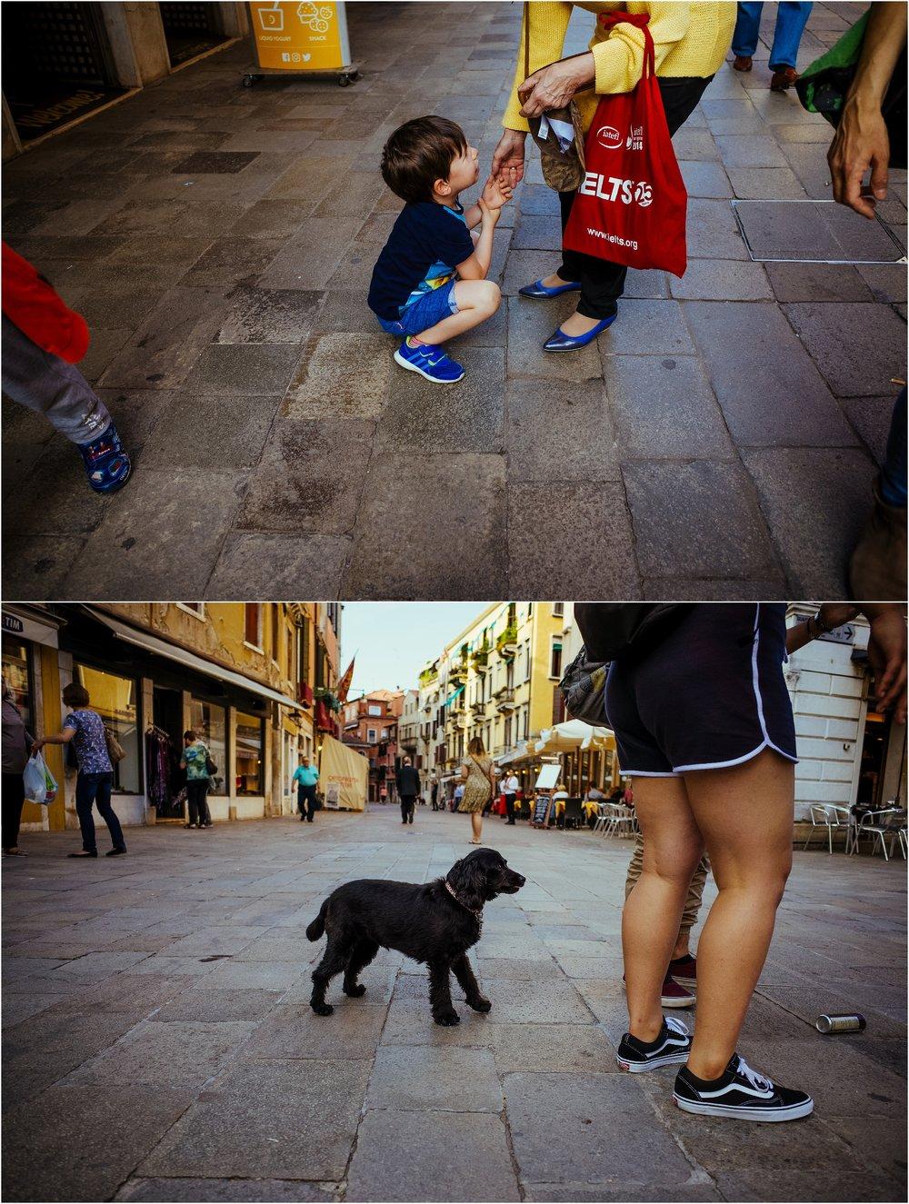 dogs in venice_0015.jpg