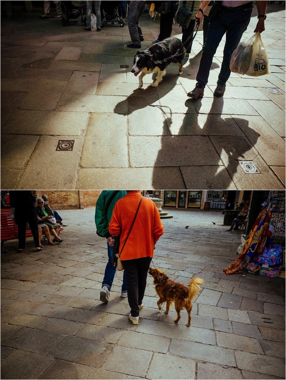 dogs in venice_0020.jpg