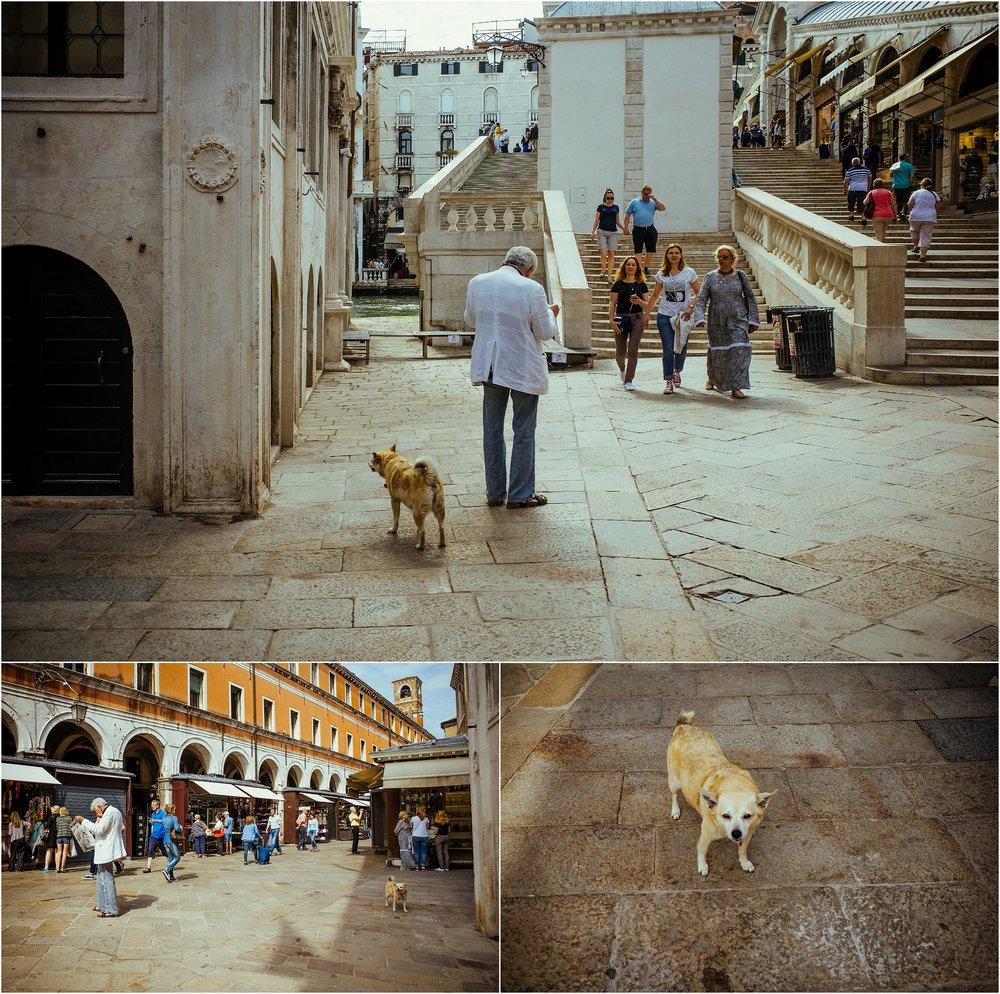 dogs in venice_0026.jpg