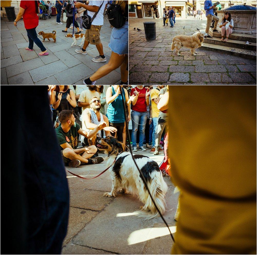 dogs in venice_0039.jpg