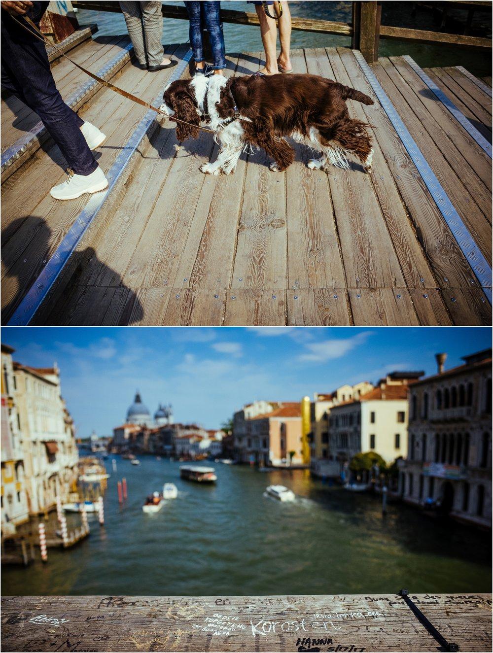 dogs in venice_0038.jpg