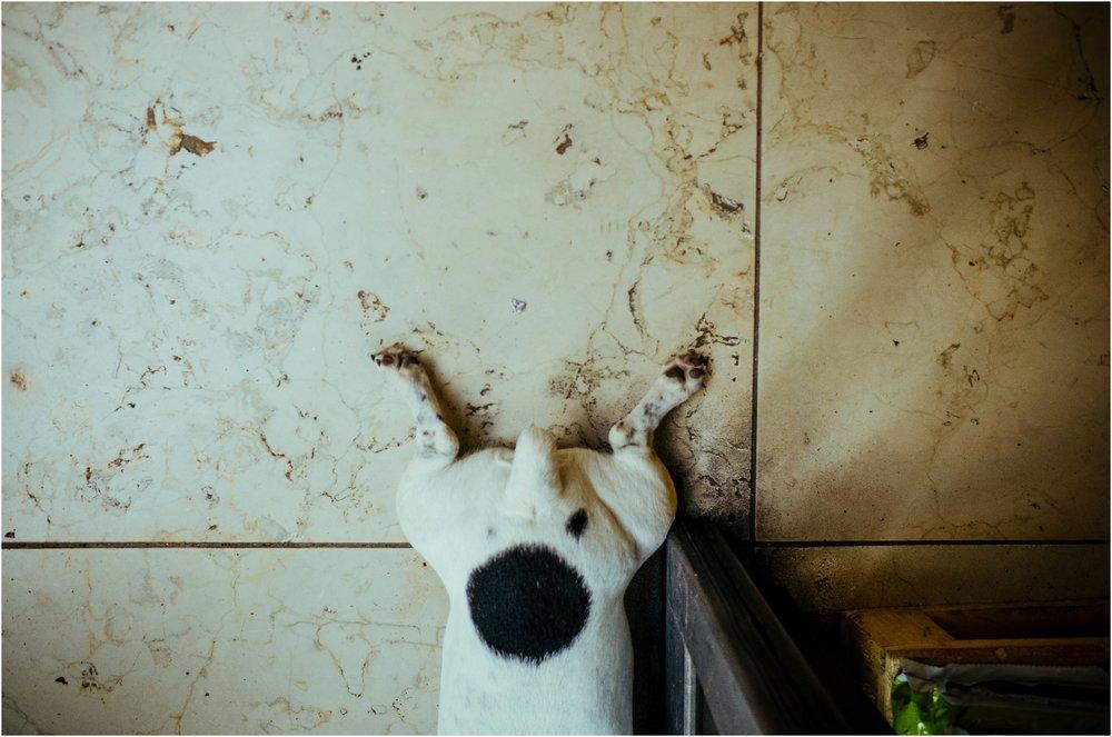 dogs in venice_0047.jpg